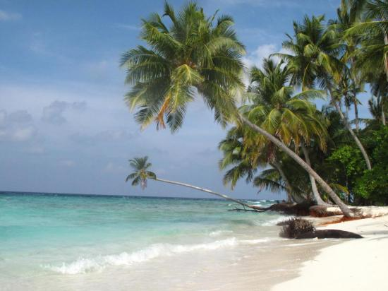 cocotier-plage